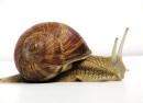 SNAIL snail by Jurgen Schoner CC BY-SA 3.0_01