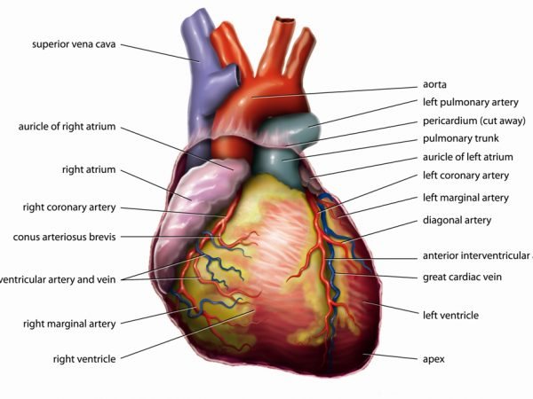 THE HEART OF THE MATTER!