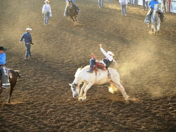 STATESIDE STORIES: A SUMMER RODEO!