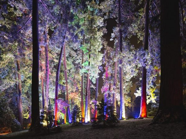 MADRID'S REAL JARDIN BOTANICO  WILL TURN INTO AN ENCHANTED GARDEN THIS HOLIDAY SEASON!