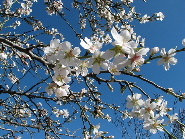 MADRID'S ALMOND BLOSSOM: IT WILL TAKE YOUR BREATH AWAY!