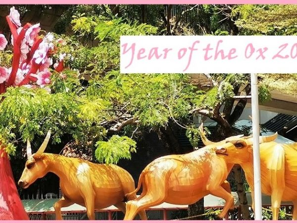 THE YEAR OF THE OX: YOU CAN STILL CELEBRATE THE CHINESE  NEW YEAR IF YOU'RE OF THE MIND!