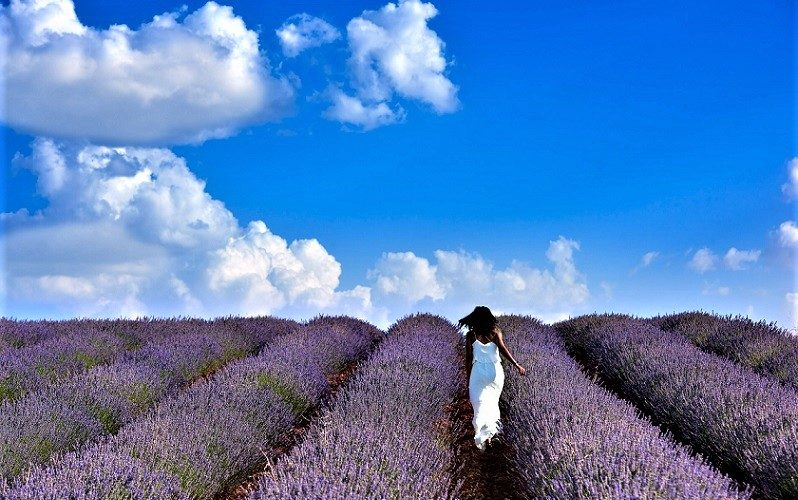 THE LAVENDER IS SPANISH TOO!